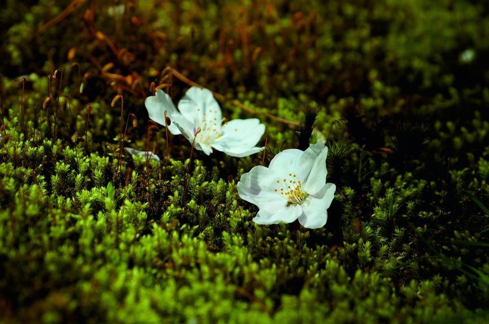 Nara Japan апрель 2013.jpg