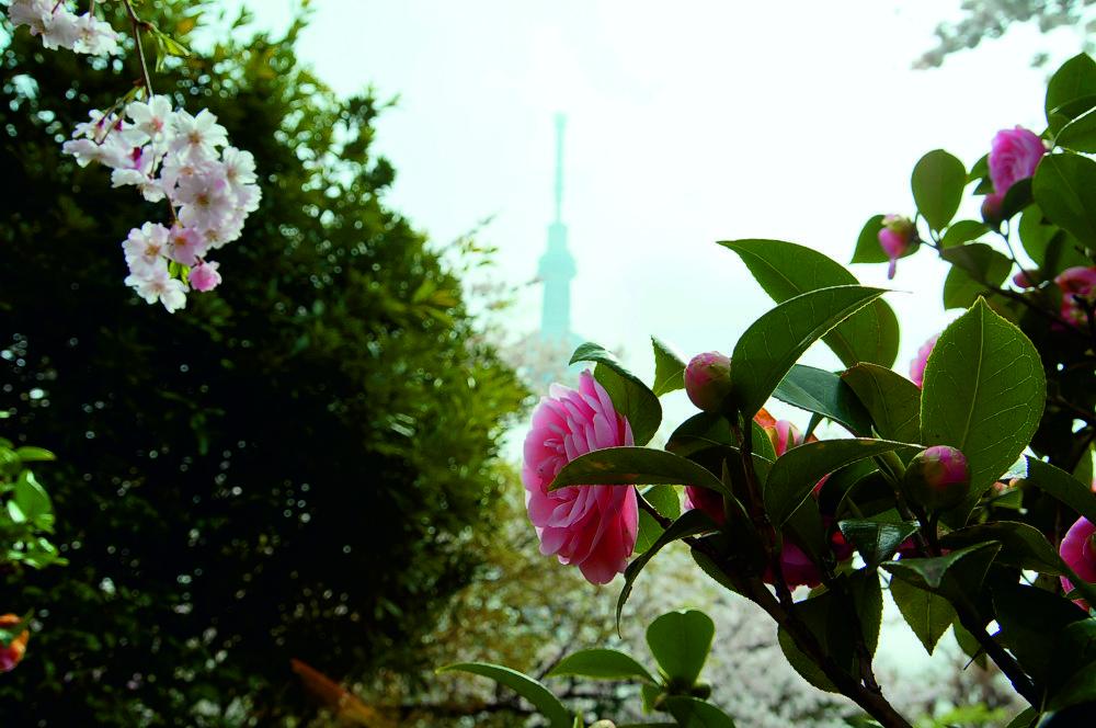 Tokyo Japan апрель 2013.jpg